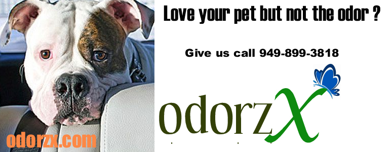 cat-dog-pet-odor-removal